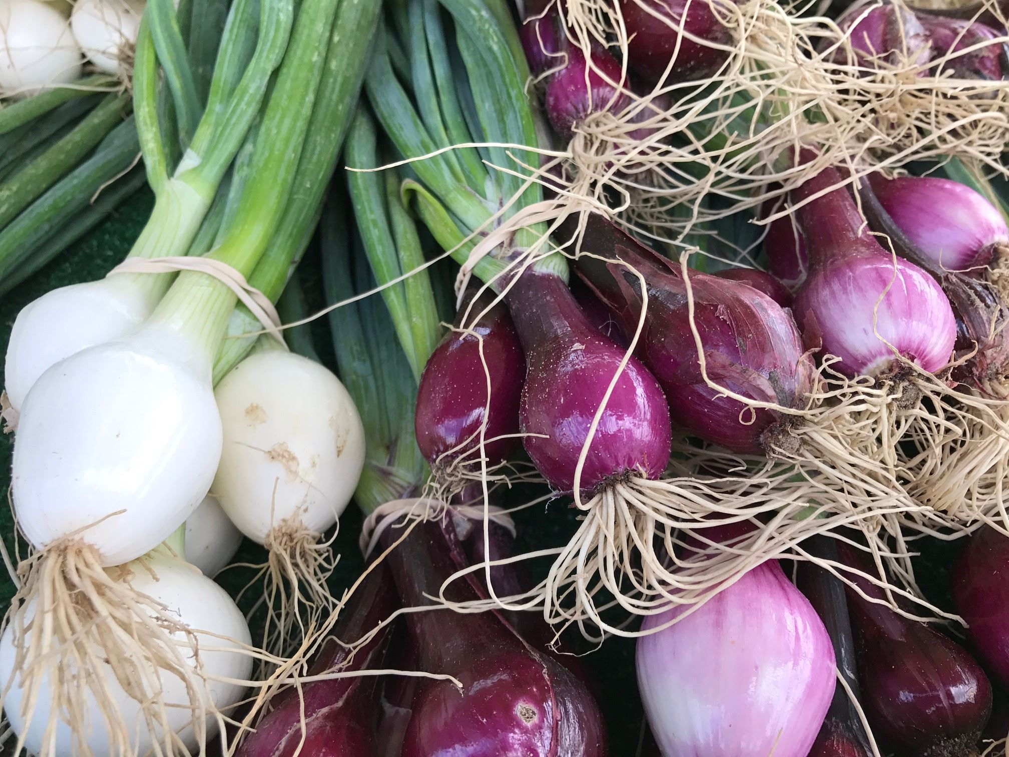Spring Onions Market Days