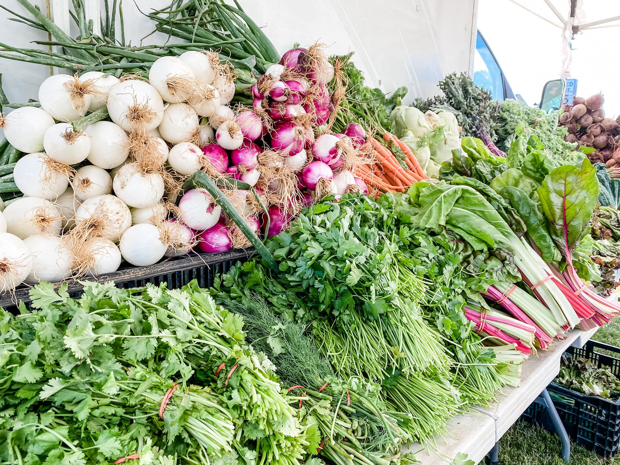 Radishes, onion, carrots and other produce from the farmers market